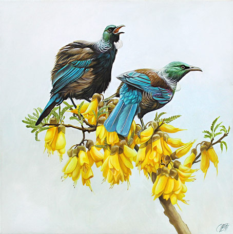 Craig Platt nz bird artist and oil paintings